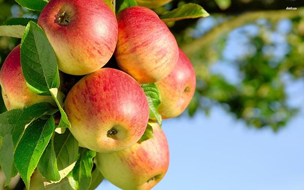 SAP apple